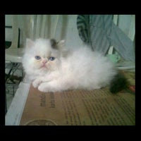 Photo taken at DomDom Petshop by Meitha R. on 4/29/2012