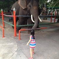 Photo taken at Dusit Zoo by Numiiz B. on 6/11/2012
