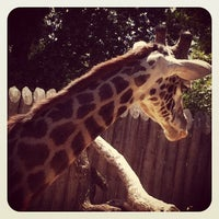Photo taken at Sacramento Zoo by Jason on 6/9/2012