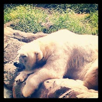 Photo taken at Maryland Zoo in Baltimore by Shaun W. on 8/11/2012