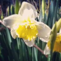 Photo taken at Bellevue Sobriety Garden by Laura H. on 3/7/2012