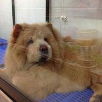 Photo taken at Asean Puppy by QQ on 5/18/2012