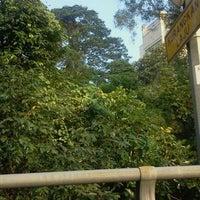 Photo taken at Pokok Puaka Universiti Malaya by Zulhilmi R. on 2/23/2012