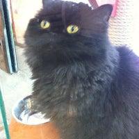 Photo taken at 웨스턴 동물의료센터 by Hwang K. on 7/15/2012