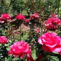 Photo taken at Raleigh Rose Garden by Lysandra on 6/9/2012