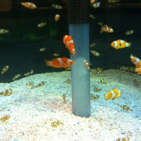 Photo taken at The Seas with Nemo & Friends by Joshefo J. on 3/22/2012