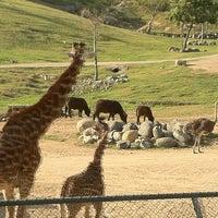 Photo taken at Safari Tram by JediLarry B. on 4/6/2012