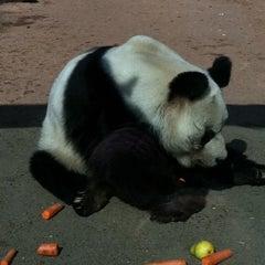 Photo taken at Zoologischer Garten Berlin by Anne S. on 3/17/2012