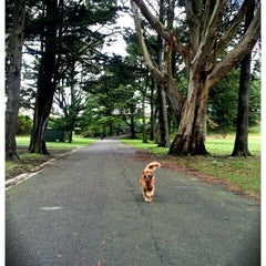 Photo taken at Crocker Amazon Park Dog Play Area by Emily C. on 3/25/2012