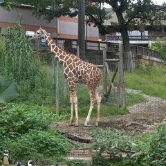 Photo taken at Giraffe House by Adam W. on 9/3/2011