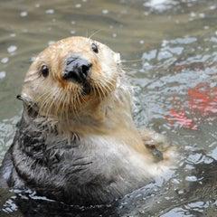 Photo taken at New York Aquarium by Belén A. on 12/16/2014