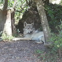 Photo taken at Wolf sanctuary by David E. on 1/11/2013