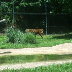 Photo taken at Dickerson Park Zoo by Jennifer S. on 6/18/2013