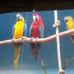 Photo taken at Zoo de Granby by Qiuwen Z. on 7/27/2013