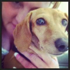 Photo taken at Dog and Cat Hospital by Jennifer W. on 7/19/2013
