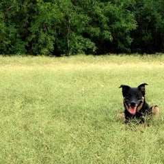 Photo taken at Shoal Creek Dog Park by Caitlyn B. on 6/24/2013
