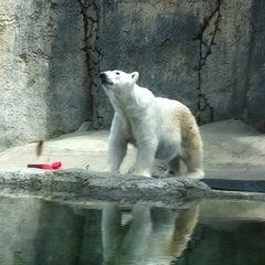 Photo taken at Oregon Zoo by Jo Ann S. on 6/17/2013