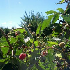 Photo taken at Applecrest Farm Orchards by SelkirkSlayer on 9/16/2012