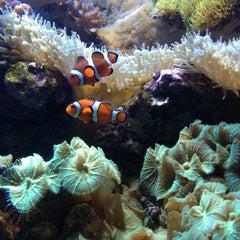Photo taken at New England Aquarium by Jimbo G. on 6/30/2014