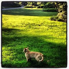 Photo taken at Azalea Gardens by Noel on 7/6/2013