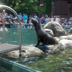 Photo taken at Central Park Zoo by Saby T. on 6/1/2013