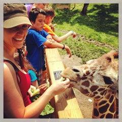 Photo taken at Elmwood Park Zoo by MyFixitUpLife on 6/23/2013