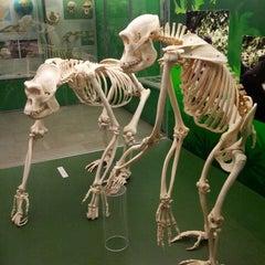 Photo taken at Museo Civico di Storia Naturale by Fulvio C. on 5/5/2013