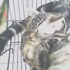 Photo taken at Asean Puppy by Amanda L. on 12/10/2012