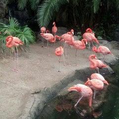 Photo taken at Audubon Zoo by John L. on 10/27/2012