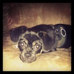 Photo taken at Doggie Styles by grandtheftamy on 11/21/2012