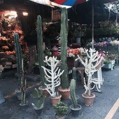Photo taken at จตุจักร ตลาดต้นไม้ by Amyy T. on 11/4/2015