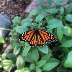 Photo taken at Desert Botanical Garden by Ian P. on 11/24/2012