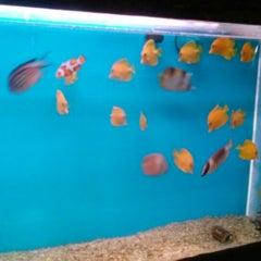 Photo taken at lucky ocean aquarium by DeA on 3/8/2015