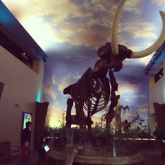 Photo taken at South Florida Museum by Jennifer C. on 2/21/2015