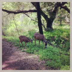Photo taken at Rancho San Antonio County Park by Todd D. on 4/2/2013