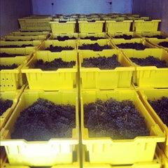 Photo taken at Stinson Vineyards by Stinson V. on 9/25/2012