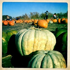Photo taken at County Line Orchard by Alison T. on 10/22/2012