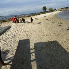 Photo taken at Davis Island Dog Park by Lauren Y. on 11/16/2012