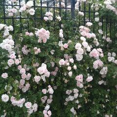 Photo taken at Lennox Street Community Garden by Adrian G. on 6/2/2013