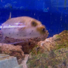 Photo taken at Moby Dick Pet Store by Christina M. on 9/17/2012