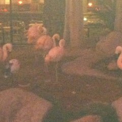 Photo taken at Flamingo North Tour Lobby by Garrard G. on 11/12/2012