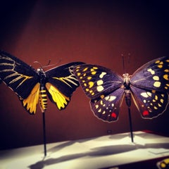 Photo taken at Sam Noble Oklahoma Museum of Natural History by Ann W. on 2/15/2013