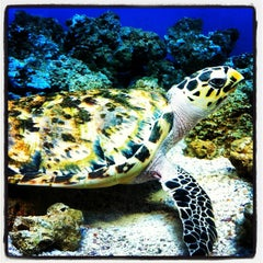 Photo taken at Moody Gardens Aquarium Pyramid by ™ Keith A. on 3/30/2013