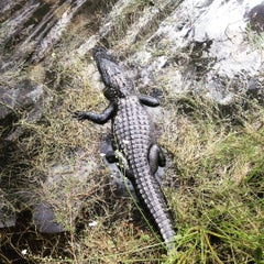 Photo taken at Big Cypress Oasis Visitor Center by Jake M. on 10/20/2015
