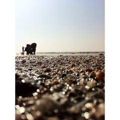Photo taken at Kelwa Beach by Jitendra S. on 1/19/2014