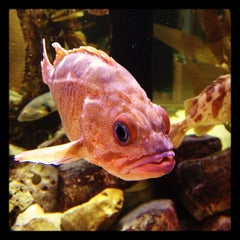 Photo taken at Heal the Bay's Santa Monica Pier Aquarium by Heal the Bay on 11/23/2012