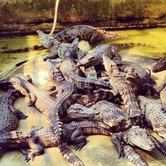 Photo taken at The Million Years Stone Park & Pattaya Crocodile Farm (อุทยานหินล้านปีและฟาร์มจระเข้พัทยา) by Sergey S. on 3/7/2013