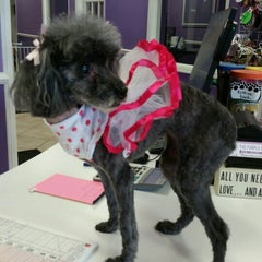 Photo taken at The Purple Pooch Bakery Boutique Groomer by Lenora S. on 9/15/2015