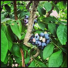 Photo taken at Garden Of Eden by Jeremy H. on 7/20/2013