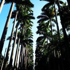 Photo taken at Jardim Botânico do Rio de Janeiro by Falcão J. on 4/6/2013